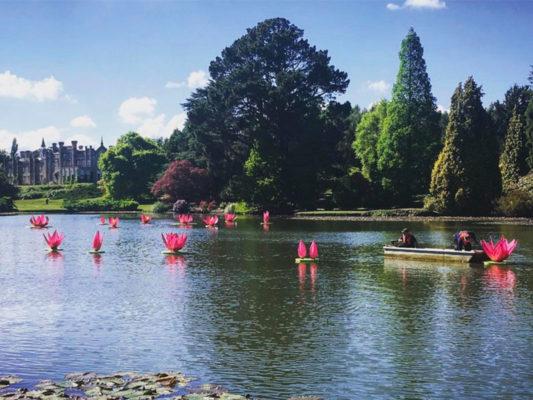 Waterlily Festival